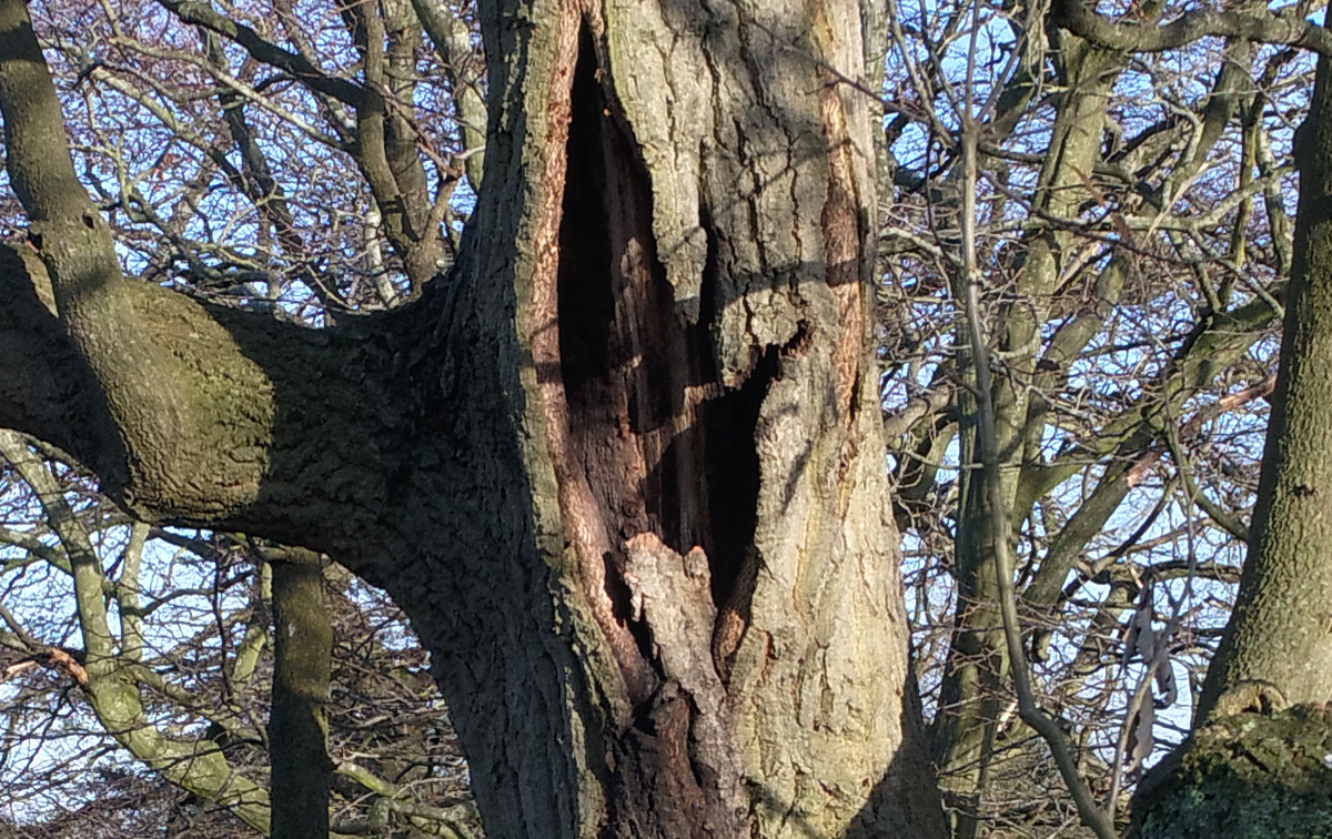 Tree lightning damage detail