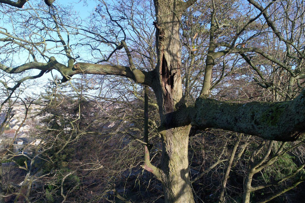 Lightning damaged tree